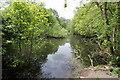 SJ5866 : Wetland near Little Budworth by Jeff Buck