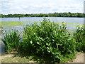 TQ2187 : Looking across the Brent Reservoir by Marathon