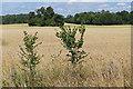 SU9982 : Rural landscape near Wexham Park by Alan Hunt