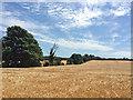 TL6458 : Barley field and big sky by John Sutton