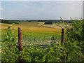 TL3951 : Barley field by Chapel Hill by Hugh Venables
