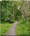 NH5559 : Path through Craig Wood by Craig Wallace