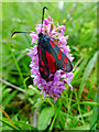 NG7527 : Burnet and Orchid on am Ploc - the Plock of Kyle : Week 28