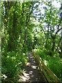 SX5646 : Footpath in Centry Wood near Stoke Beach by David Smith