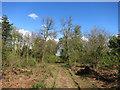 SX3572 : Track in Holmbush Plantation by Des Blenkinsopp