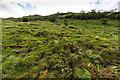 NN2113 : Hillside above Glen Fyne by David P Howard