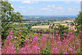 ST4917 : Flowers on St Michael's Hill at Montacute : Week 30