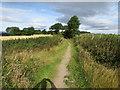 SE2406 : Track to Gunthwaite Hall by Peter Wood