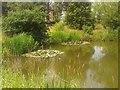 SJ6876 : Fishing Pond, Pickmere by Eileen Littler