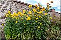TQ3092 : Walled Garden, Broomfield Park, London N13 : Week 33