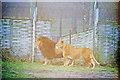 SP9634 : Woburn Safari Park by Adrian S Pye