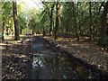 SP0997 : Muddy track in Darnel Hurst, Sutton Park by Robin Stott