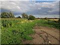 TL5264 : White Fen Droveway by Hugh Venables