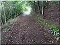 SX3580 : Footpath through nature reserve, Greystone Quarry by David Smith