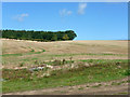 TL1219 : Stubble field north of Copt Hall Road by Robin Webster