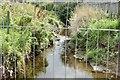 J3773 : The Knock River, Clara Park, Belfast (September 2015) by Albert Bridge