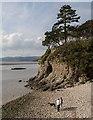 SD4575 : Cove : Week 38