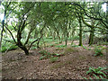 TL0117 : Whipsnade Heath woodland by Robin Webster