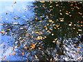 TR0062 : Signs of autumn, Oare : Week 40
