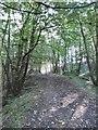 SJ9665 : Danebridge, footpath by Mike Faherty