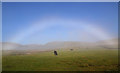 NT2724 : A fogbow at Dryhope : Week 39