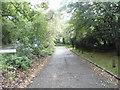 SU9791 : Wilton Lane, Jordans by David Howard
