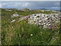 L7433 : Rock outcrops and wild flowers by Jonathan Wilkins