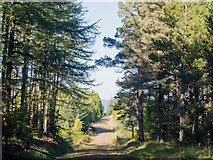 NH6761 : Millbuie Forestry Road heading to Brae Farm by Julian Paren