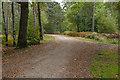SU8357 : Woodland track, Hawley Common by Alan Hunt