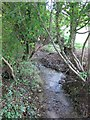 ST7768 : Looking upstream in the Ranscombe valley by Dr Duncan Pepper