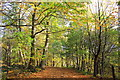 SJ5371 : Autumn in Delamere Forest by Jeff Buck