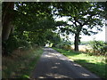 TL0035 : Minor road beside Steppingley Copse by JThomas