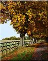 SU5375 : Horse chestnut avenue, Hampstead Norreys, Berkshire by Oswald Bertram