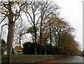 SD7511 : Stitch Mi Lane, Harwood by Philip Platt