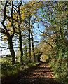 SU6583 : Autumn colours, Checkendon, Oxfordshire : Week 47