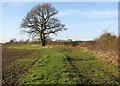 TL3358 : Towards Bourn by John Sutton