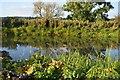 SU5466 : Kennet & Avon Canal by N Chadwick