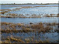 TL5292 : The River Delph in the flood water - The Ouse Washes near Welney by Richard Humphrey