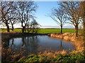TA2138 : Roadside Pond : Week 1