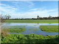 TL9333 : Stour water meadow : Week 2