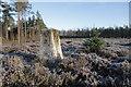 NJ3654 : Ordiequish Forest : Week 2