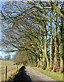 SU4956 : Beech avenue, Sydmonton, Hampshire by Oswald Bertram