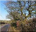 SD7511 : Roading Brook Road, Harwood by Philip Platt