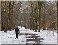NT2440 : Winter woodland by the Tweed, Peebles by Jim Barton