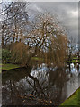 SJ6180 : A willow overlooks the pond at Higher Whitley by Ian Greig
