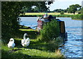 SJ6870 : Swans and narrowboat on the Trent & Mersey Canal by Mat Fascione