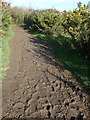 SZ7799 : Muddy stretch of New Lipchis Way by Rob Farrow