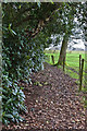 SJ7383 : A path near Rostherne Mere by Ian Greig