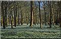 SU4073 : Snowdrops, Welford Park, Berkshire by Oswald Bertram