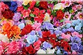SO8554 : Colourful flowers by Philip Halling